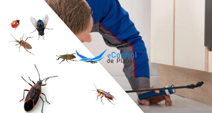 Control de Plagas en Cortes de Baza