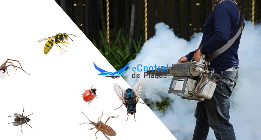Control de Plagas en Valleseco