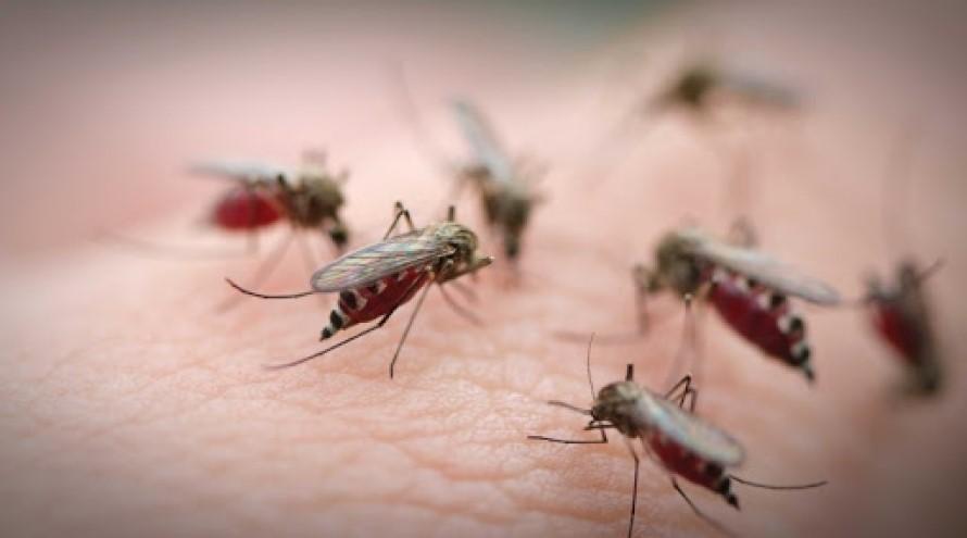 Exterminar Mosquitos